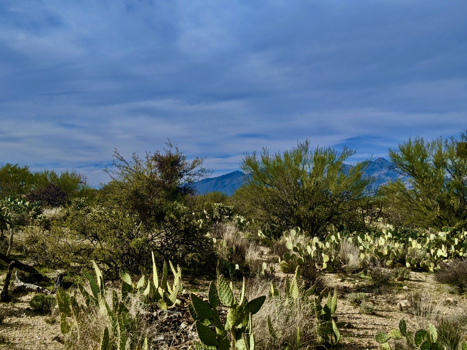 Tucson lot in Wild Horse Ranch