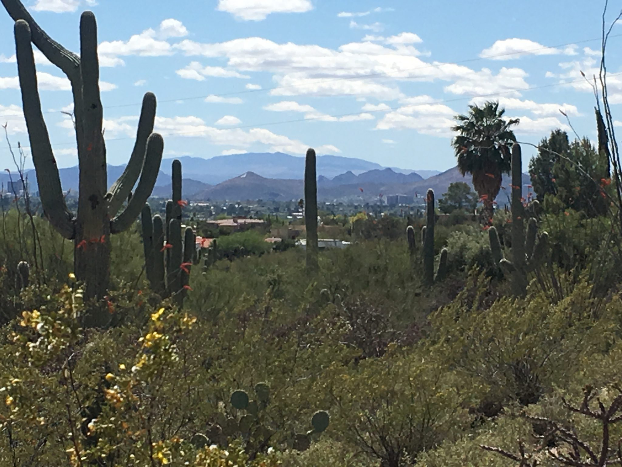 Catalina Foothills City and Mountain View Lot
