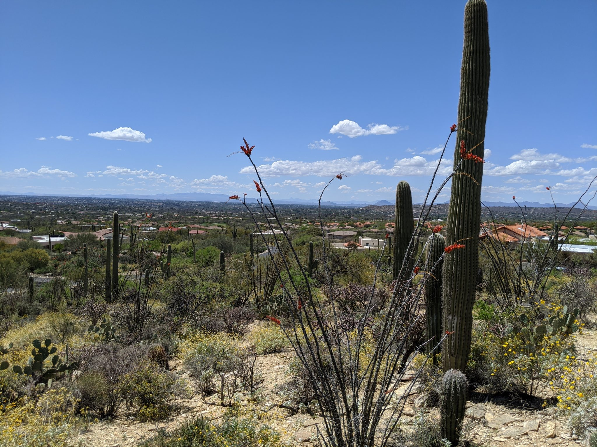 Northeast Tucson Gated Home Lot
