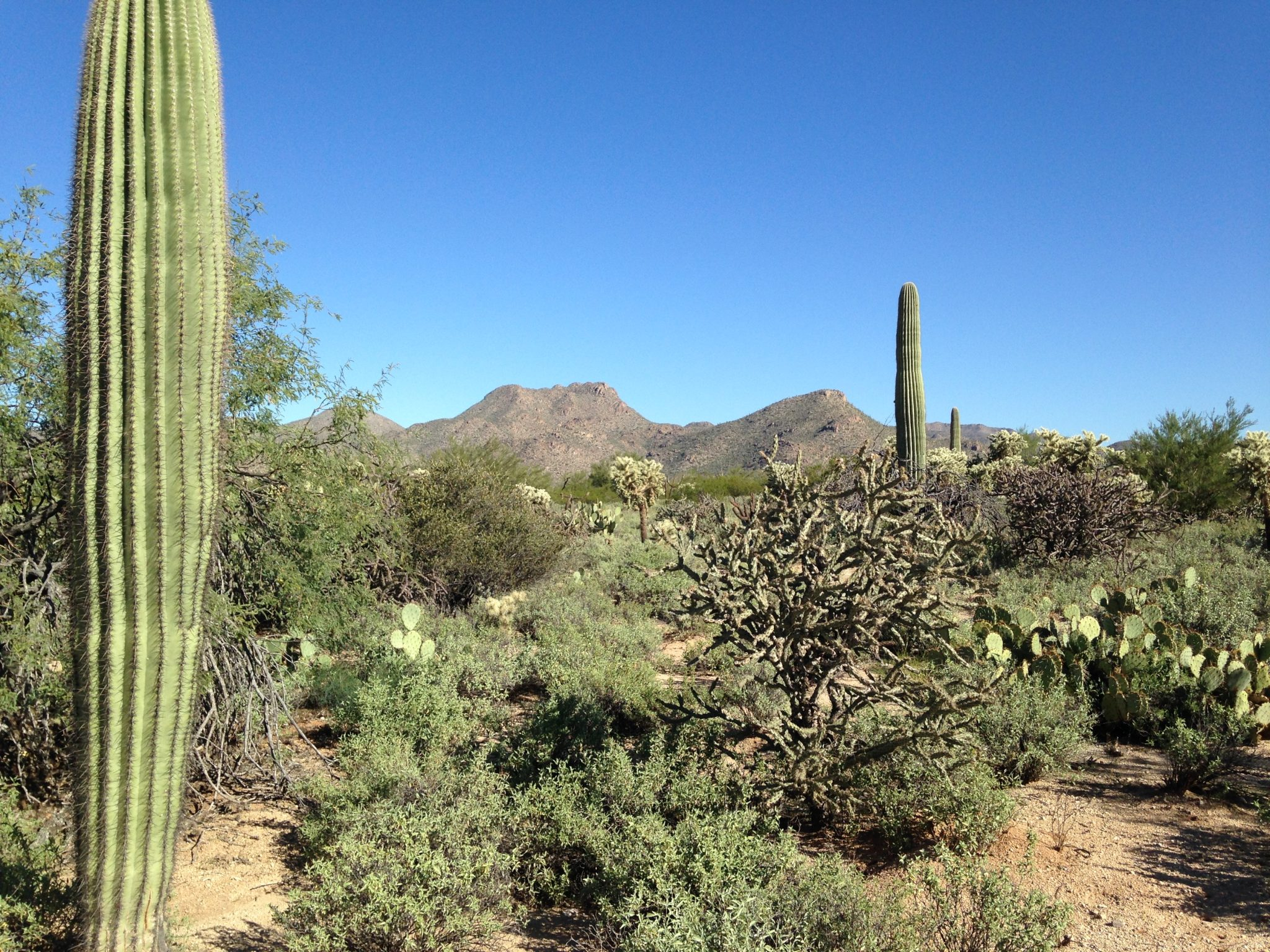 NW Tucson Investment Land