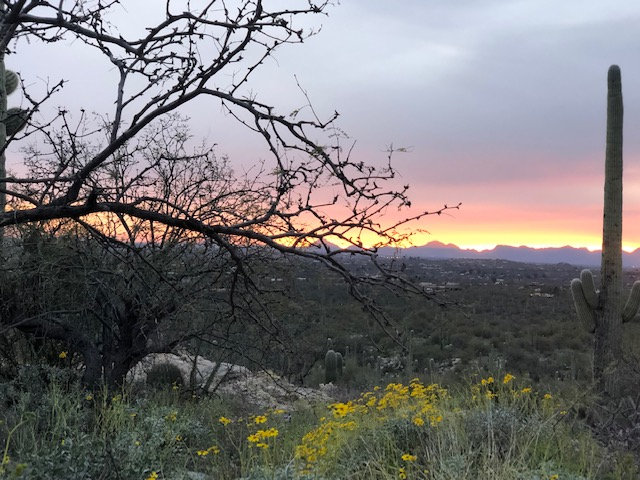 13011 E. Placita Cantil – Palo Verde Ranch Lot 79