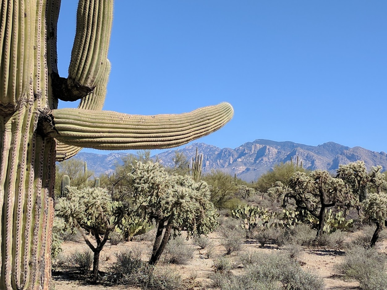Spectacular Tucson Mountain Lot For Sale