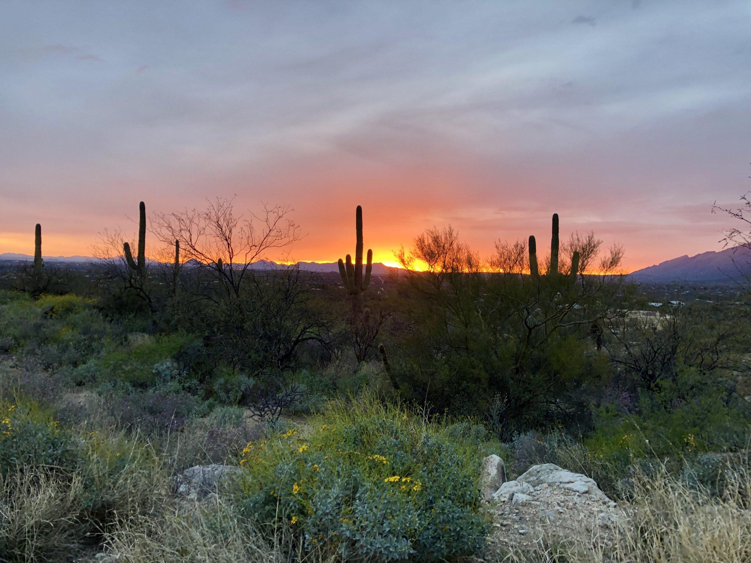 Palo Verde Ranch Lot 6.3 ac – $350,000