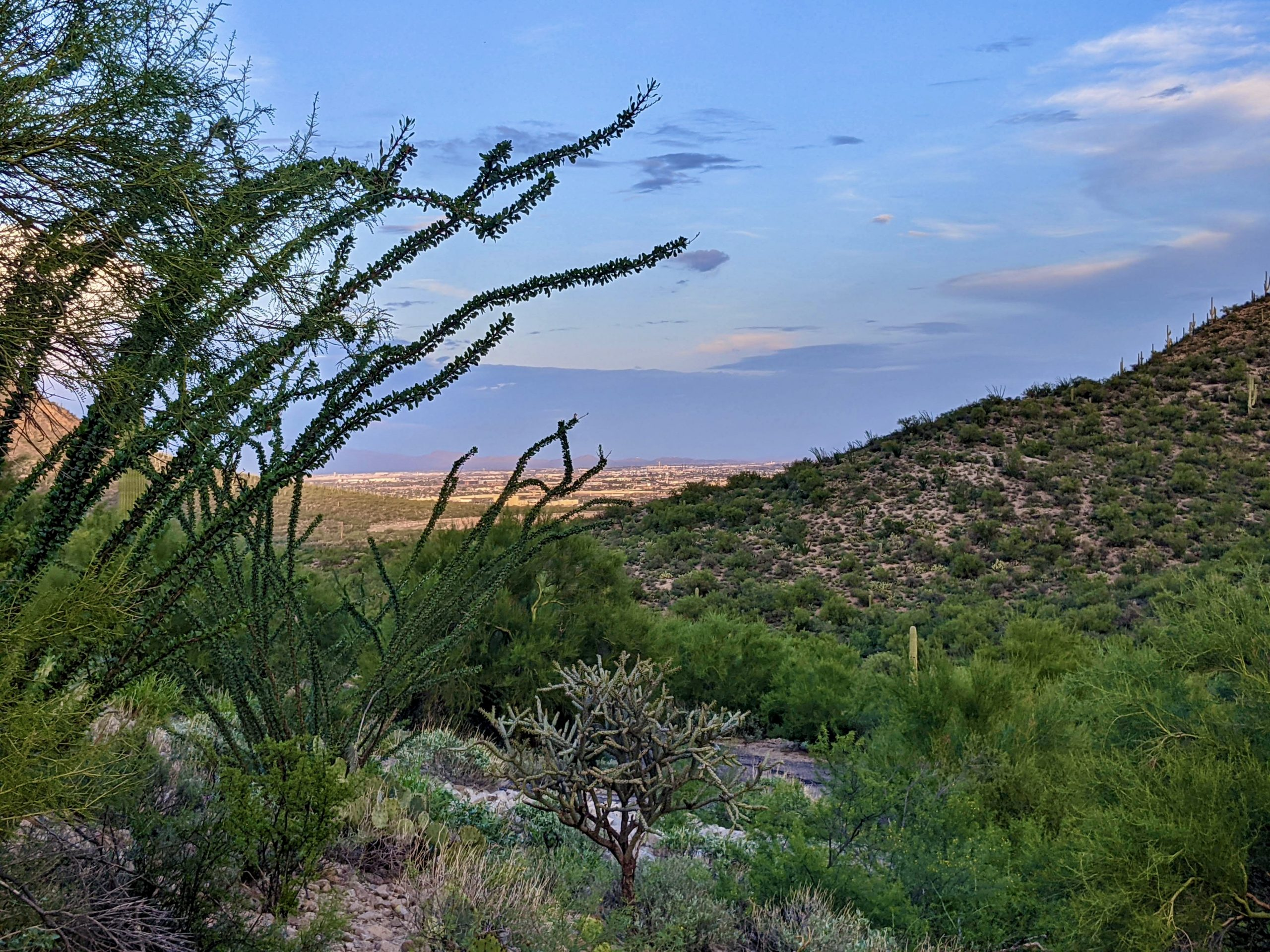 Stunning 3.5 acre Lot in West Tucson